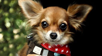 best-pet-strollers-for-small-dogs